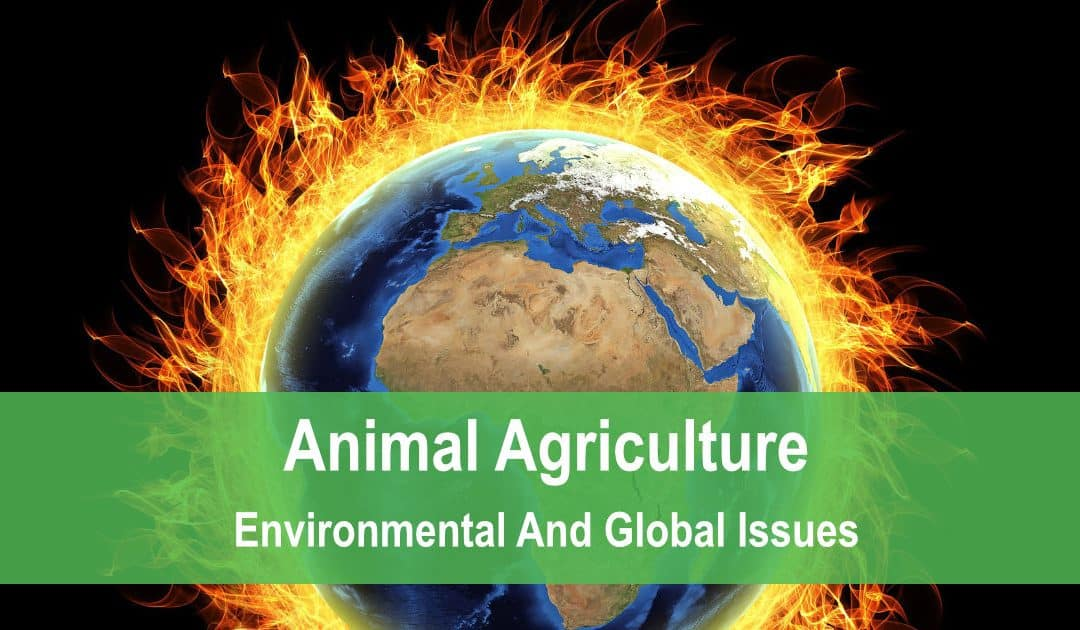 Animal Agriculture: Environmental And Global Issues