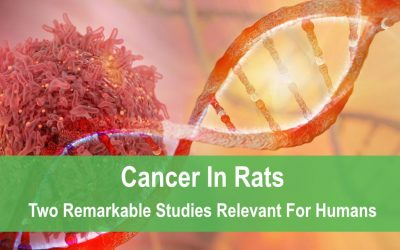 Cancer In Rats: Two Remarkable Studies Relevant For Humans