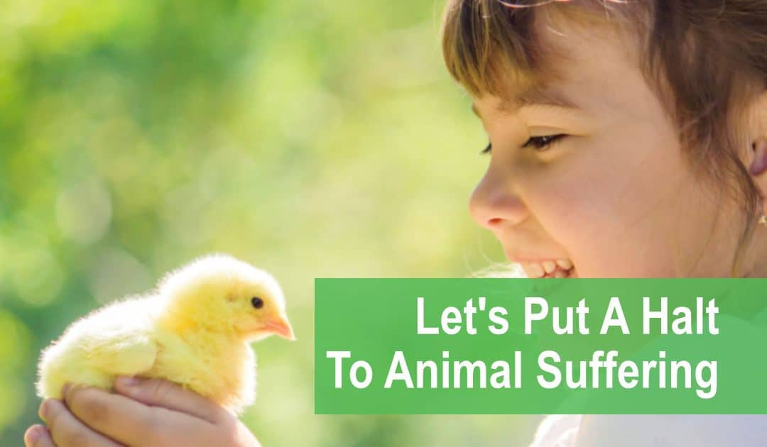 Let's Put A Halt To Animal Suffering